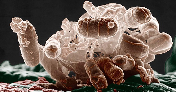 Gut Bacteria Evolve to Perfectly Tailor Themselves to Your Body