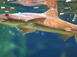 Shark Gives 'Virgin Birth' to Miracle Baby in All-Female Tank
