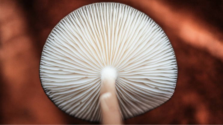 Mycelium Savior: How Mushrooms Are Fighting Climate Change