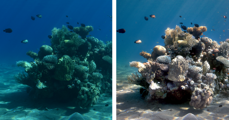 New Algorithm Removes Underwater Distortions for Clear Colorful Pictures