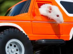 Researchers Train Rats to Drive a Make-Shift Tiny Car
