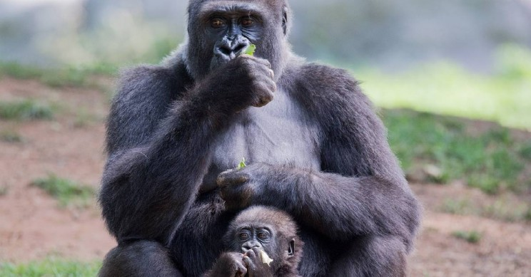 Fathers' Help Linked To Bigger Brains In Offspring