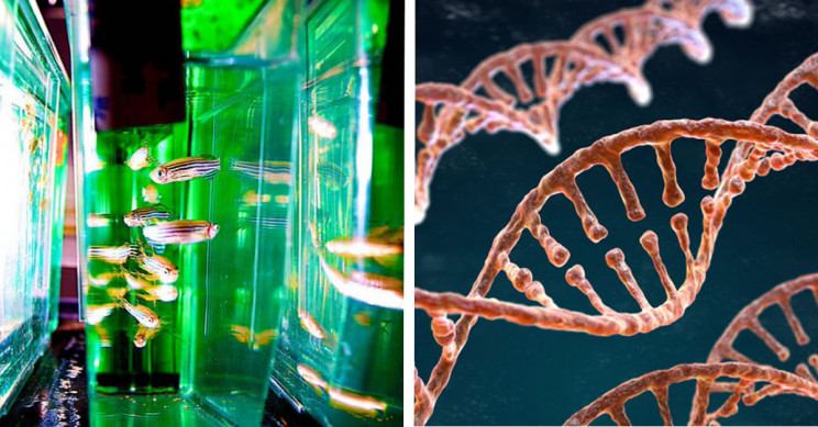 Happy DNA Day: 11 Facts about Genetic Engineering and Why It's Important