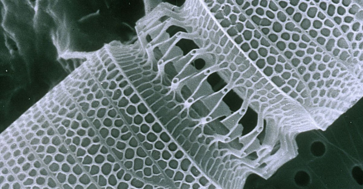 Nanotechnology: Life-Changing Innovation or Just Too Good to Be True?
