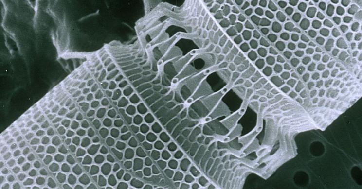 infinite tech growth nanobots