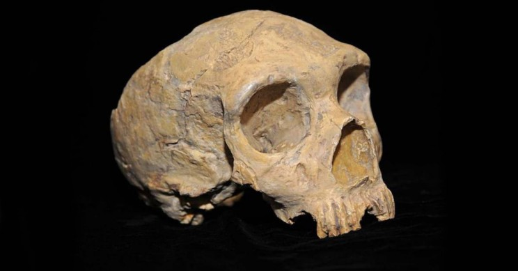 New Discoveries Give Insight into Early Neanderthal History