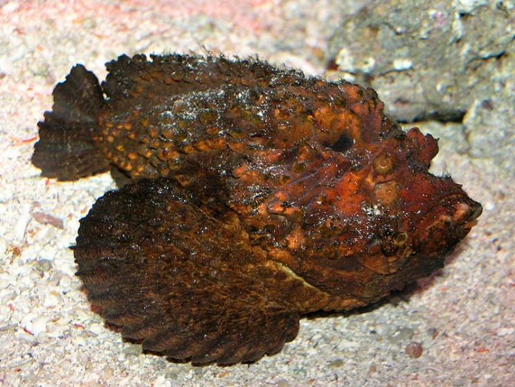 oceans most dangerous animals stonefish