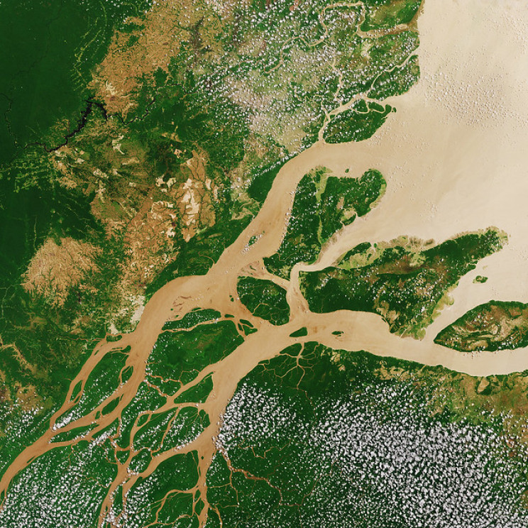 Researchers Pinpoint Rainforest Regrowth Hotspots to Fight Climate Change