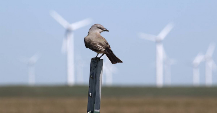 Painting Wind Turbines Black Can Reduce Bird Deaths by 70%