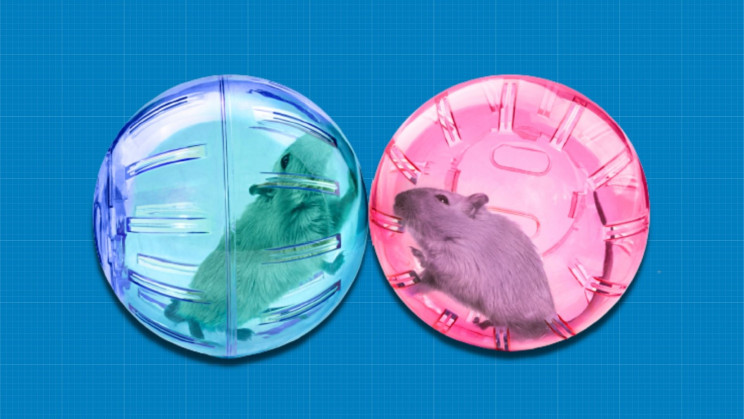 Brain Circuit Stops Mice From Mating With Sick Individuals