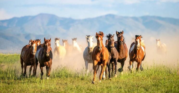 Male Horses Were Preferred Over Female Ones in the Bronze Age