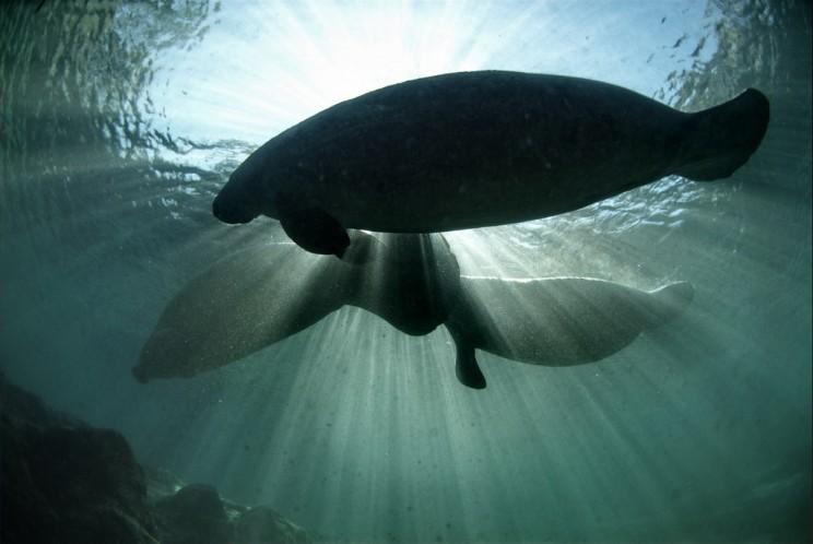 Marine Mammal Protection