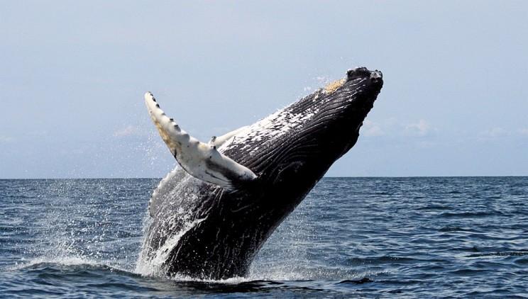 Marine Sanctuaries