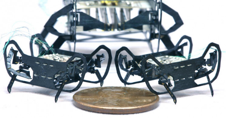 Cockroach-Inspired Mini Robots Are Small but Mighty
