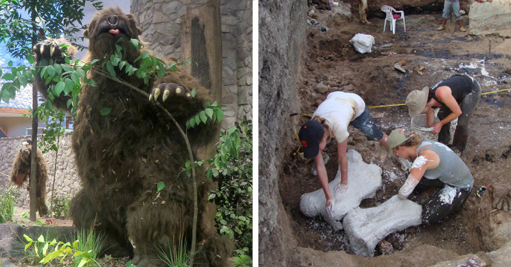 'Death Pit' Reveals Giant Sloths May Have Died From Poopy Water