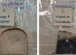 White Bread Mold Experiment Teaches the Importance of Washing Hands