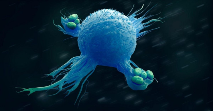 We Can Reprogram Inflammatory Immune Cells to Tone it Down, Study Finds