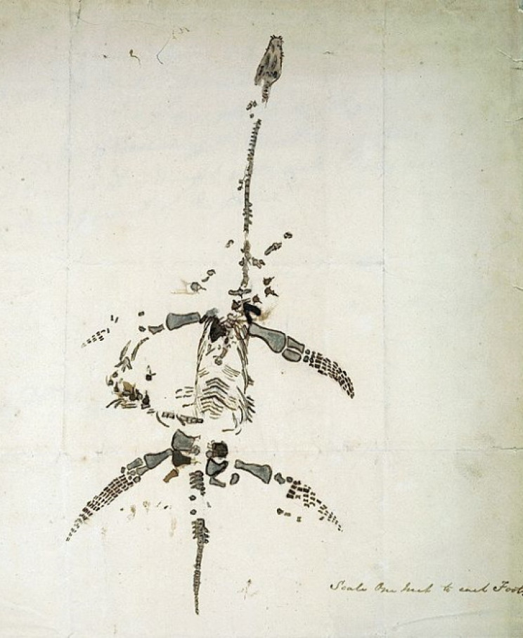 Anning drawing of a plesiosaur