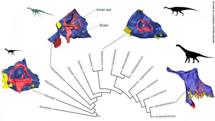 Scientists Rebuilt the Brain of One of the Oldest Dinosaurs