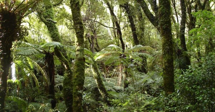 Ancient Antarctica was a warm swampy rainforest, says sediment study
