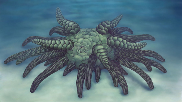 Ancient Sea Creature Fossil Is Named After Cthulhu