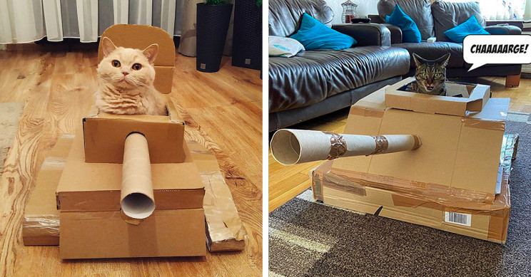 People Are Building Cardboard Tanks for Their Cat Friends Amid Quarantine