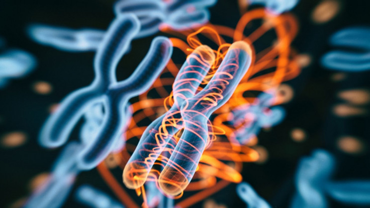 Gene Editing: The Future of the Olympics or a Looming Crisis?