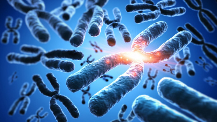Human Chromosomes Mass Measured For the First Time in 130 Years
