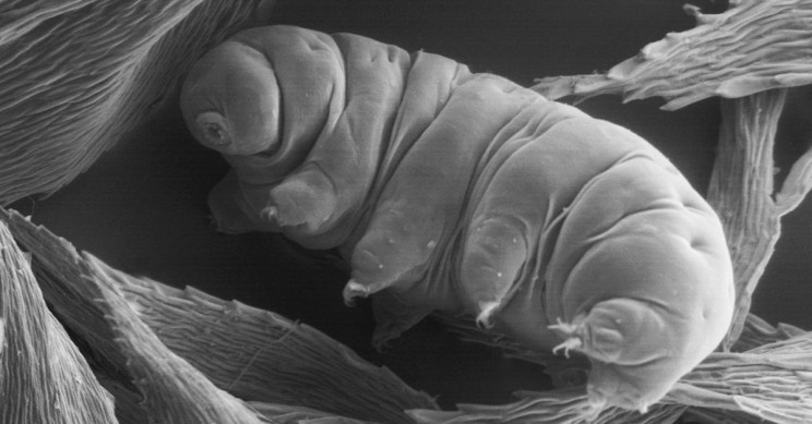 25 of Your Most Frequently Asked Questions About Tardigrades