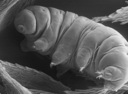 25 of Your Most Frequently Asked Questions About Tardigrades Answered!