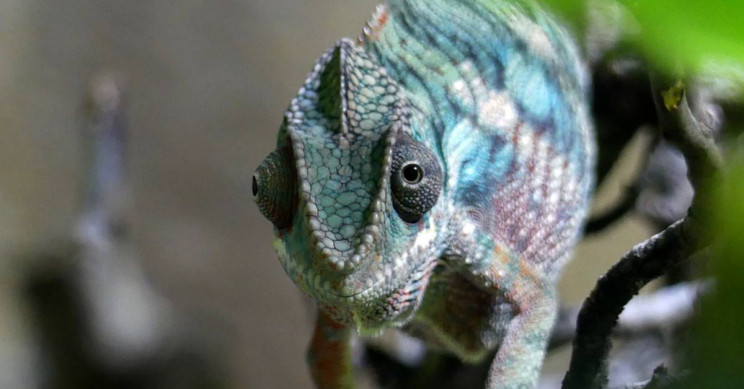 New Artificial 'Chameleon Skin' Changes Color when Exposed to Light, Heat