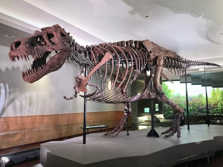 Sue Tyrannosaurus rex
