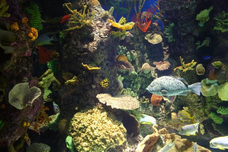 Wild Reef at Shedd Aquarium