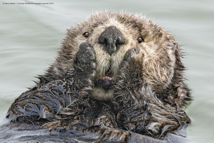 13 Comedy Wildlife Photographs of the Year