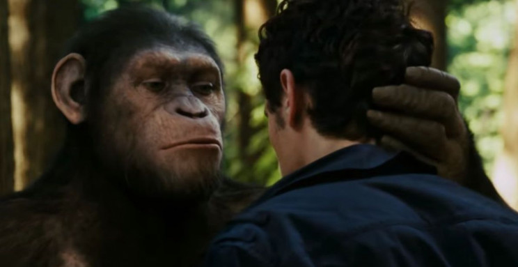 Researchers Translate How Non-Human Primates Hear Sounds