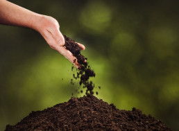 Turn Your Deceased Loved One Into Soil: First Human Compost Site to Open in 2021