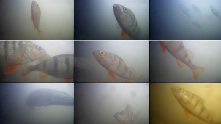 The World's First Fish 'Doorbell' Lets People Help Fish
