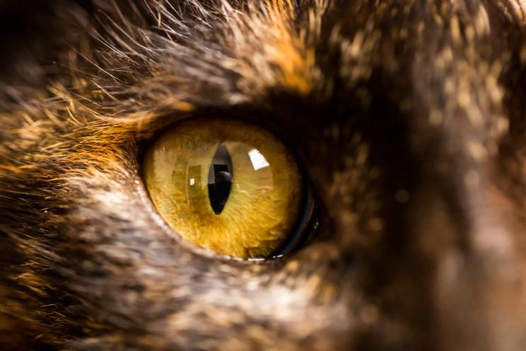 uv vision cats
