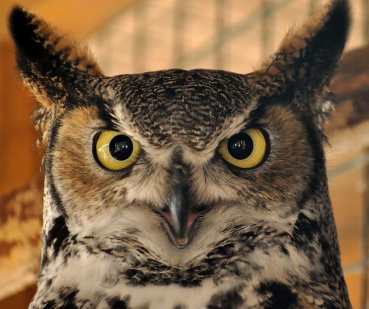 uv light vision owl
