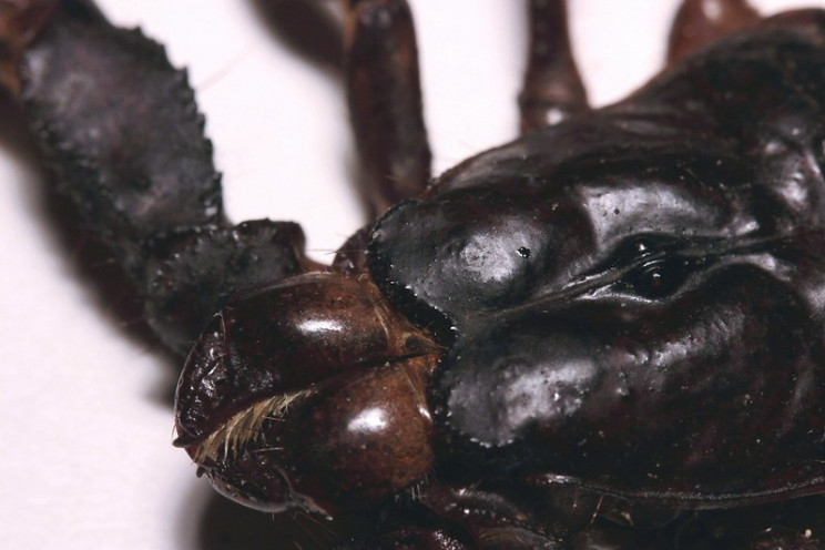 uv light vision scorpion