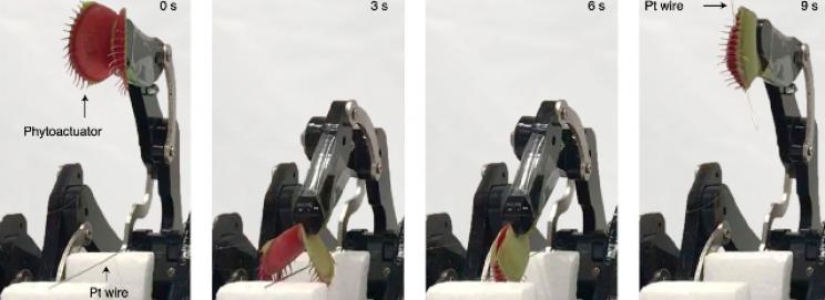 Mühendisler, Canlı Venüs Sinekkapanını Cyborg Robotik Kapıcıya Dönüştürdü