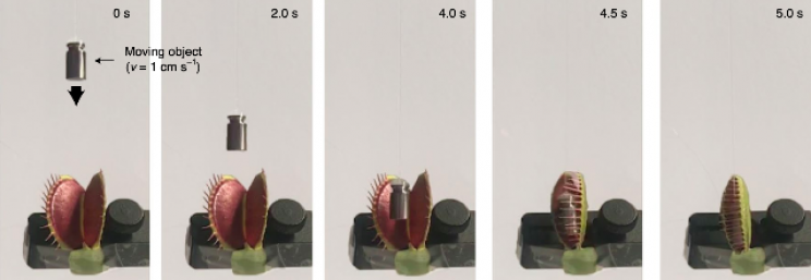 Engineers Turned Living Venus Flytrap Into Cyborg Robotic Grabber