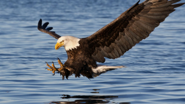 Mysterious Bald Eagle Killer Identified After 25 Years