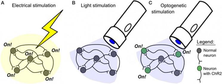 Mind Control Through Light: The Emerging World of Optogenetics