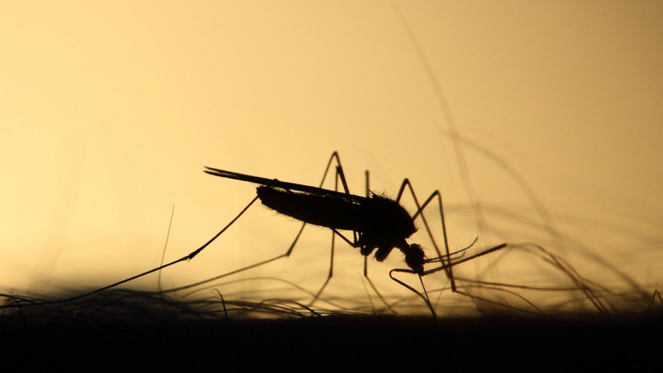 A Company Just Released 150K Genetically Modified Mosquitoes in the United States