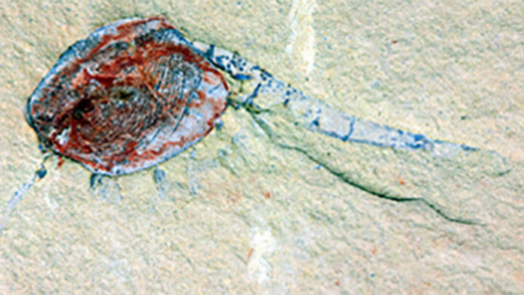 """Discovery of """"Fossil Graveyard"""" Shows What Life Looked Like 518 Million Years Ago"""