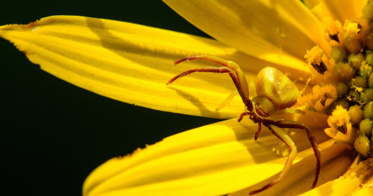 Spider Flight Observations Can Lead to Transport Innovations, Scientists Say