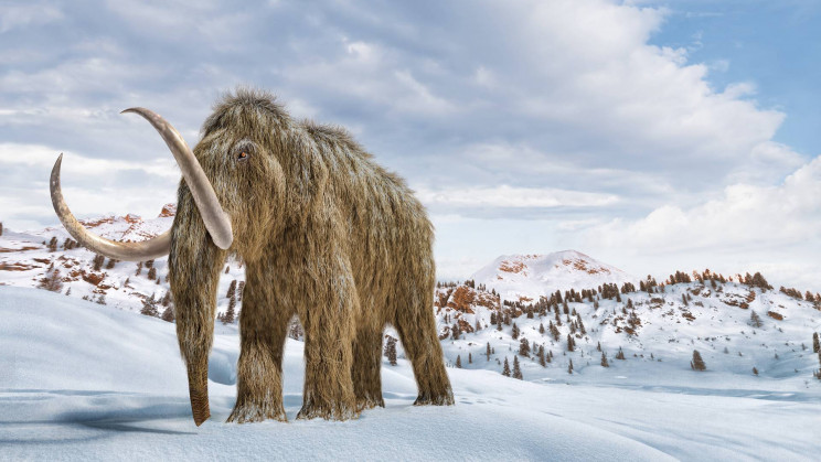 Permafrosted Mammoth Teeth Yield World's Oldest DNA