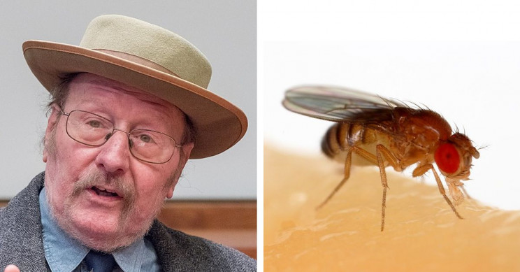 How Jeffrey Hall's Fruit Fly Fascination Cracked the Circadian Rhythm