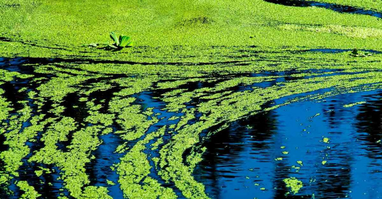 Link Discovered between Parkinson's and a Neurotoxin Found in Blue-Green Algae